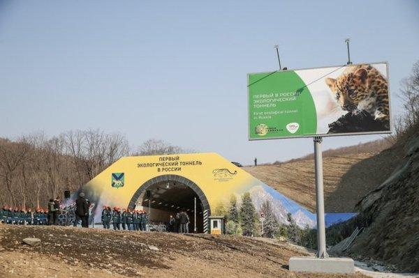 Нарвинский тоннель Тоннель, Леопард, Приморский край, Нарва, Первый экологический