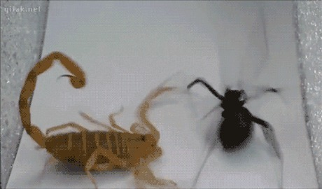 Scorpion wins! Flawless victory.