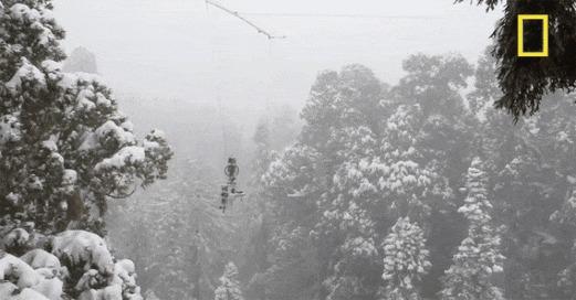 Как делаются фотографии очень высоких деревьев