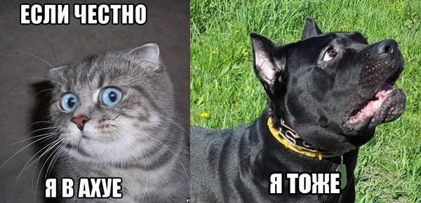 Как приручить собаку, которая хочет тебя сожрать Кане-Корсо, Собака, Щенки, Кишинев, Дрессировка собак, Лето, Моё, Длиннопост