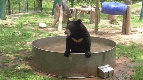 """""""Бэтведь"""" или медведь бэтмена"""