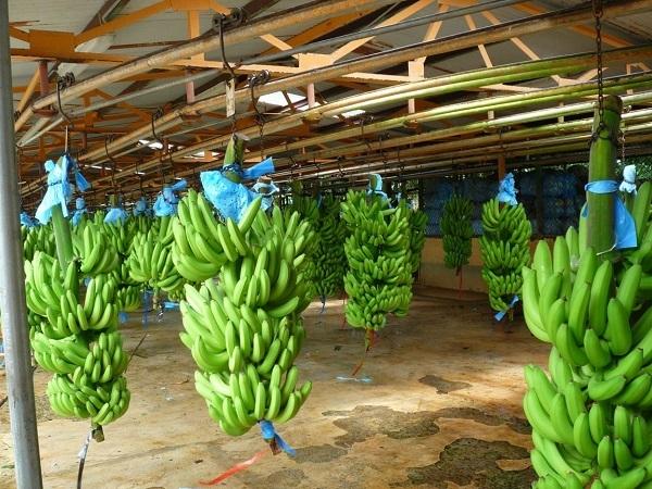vmesto-huya-banan-narezki