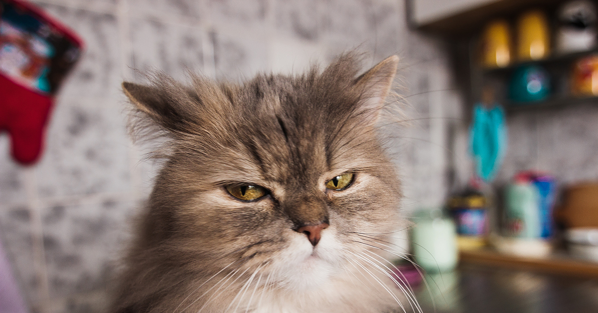 Картинки люблю тебя мой родной котик компактный мини