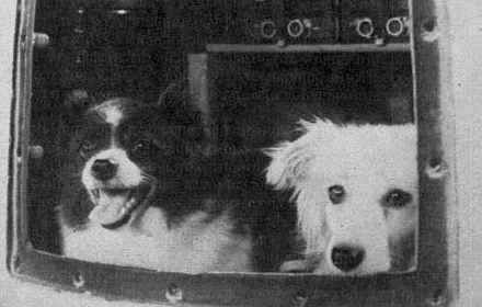 Первыми были они... Первые, космос, Собака, длиннопост