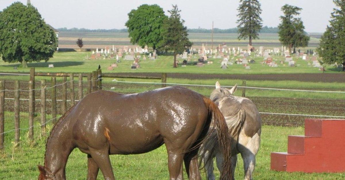 Лошадь в грязи картинка