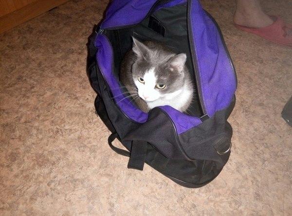 Вчера девушка собирала сумку(едем к её родителям), кот собрался быстрее всех моё, кот, поездка, сборы кота
