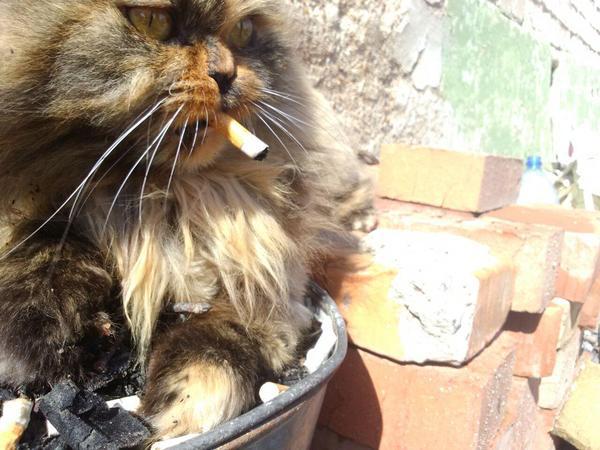 земельном участке запах курева для кота это процесс, результате