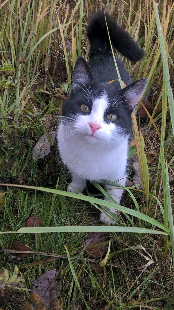Осенний кот с умными глазами Кот, Милота
