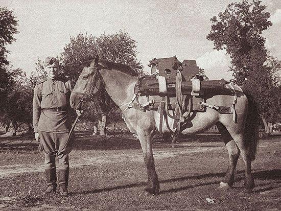 Картинки по запросу монгольская лошадь на войне фото