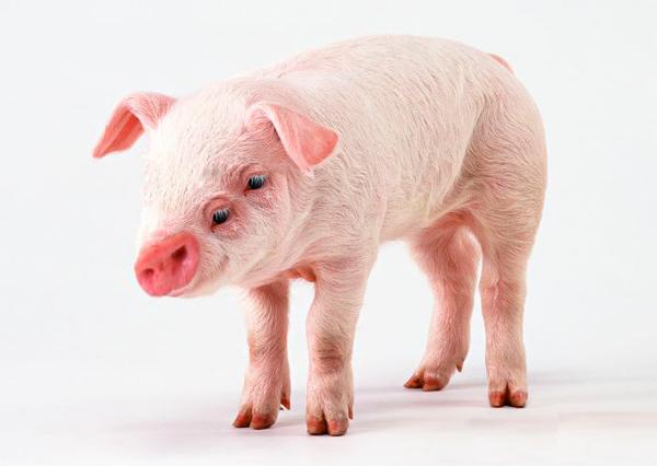 Свинка Скачать Торрент - фото 2