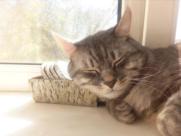 Вот так кот смотрит на твои сборы на работу Кот, Праздники