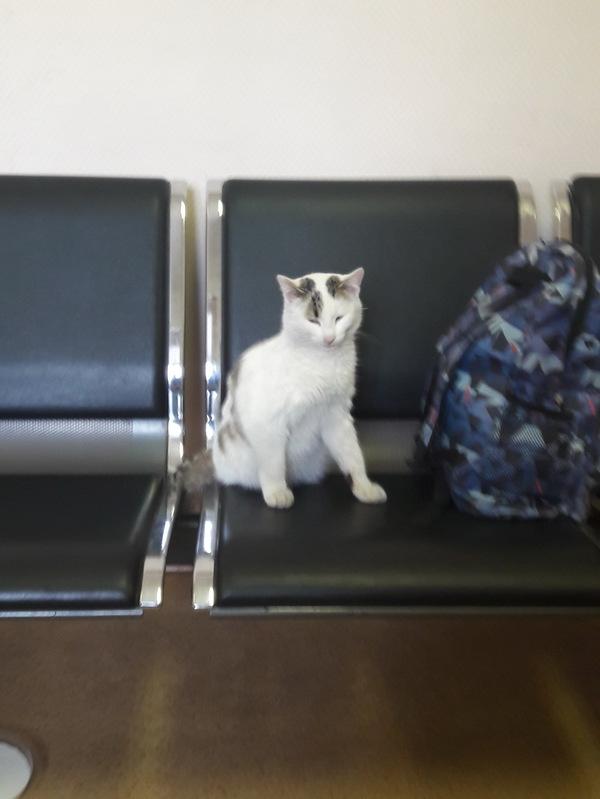 Милота ) кот, доброта, новосибирск, Любовь, милота