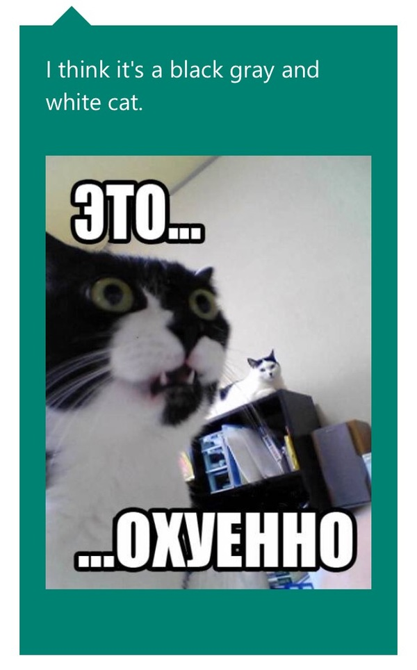 Когда удивляешься технологиям Кот, CaptionBot, Технологии
