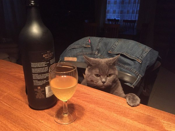 Любимый собутыльник Кот, Собутыльник, Сидр, Бухаю с котом