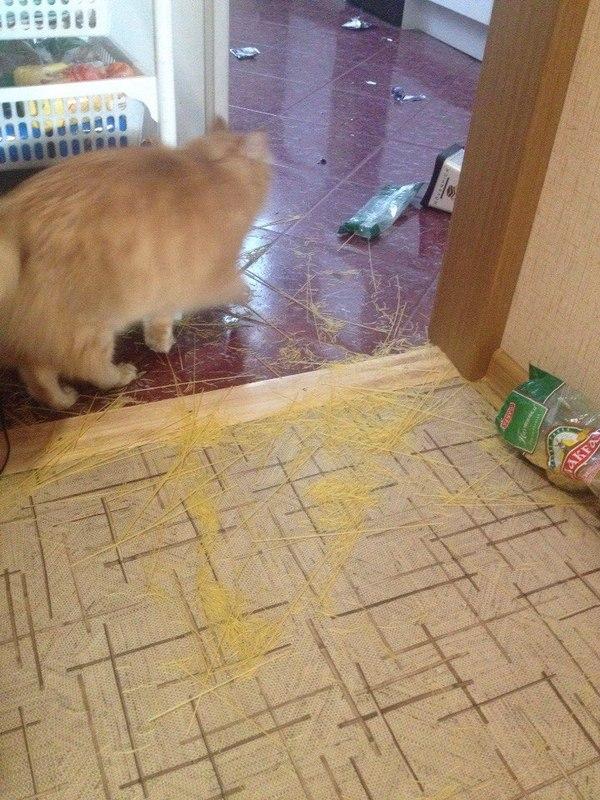 Без кота - жизнь не та, говорили они.. Хулиганство, Кот, Макароны по-котски, Длиннопост