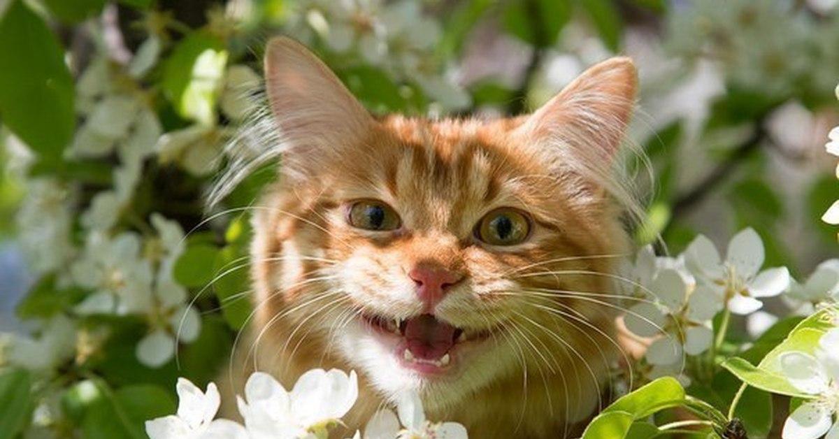 темрюкский кот радость картинки кокосовый мусс мякотью