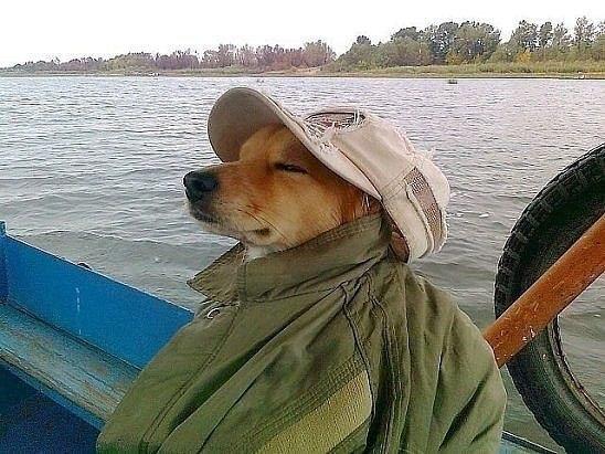Когда твой пес настоящий рыбак!