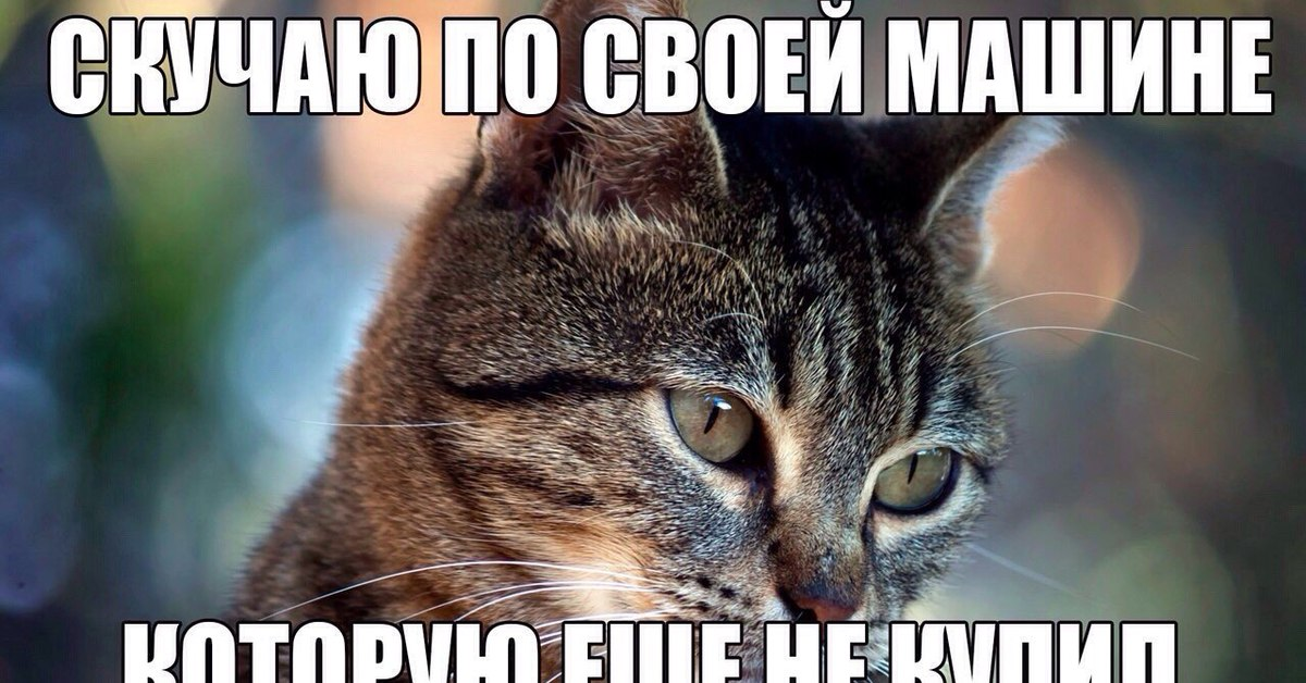 Обои На Рабочий Стол Бесплатно Коты
