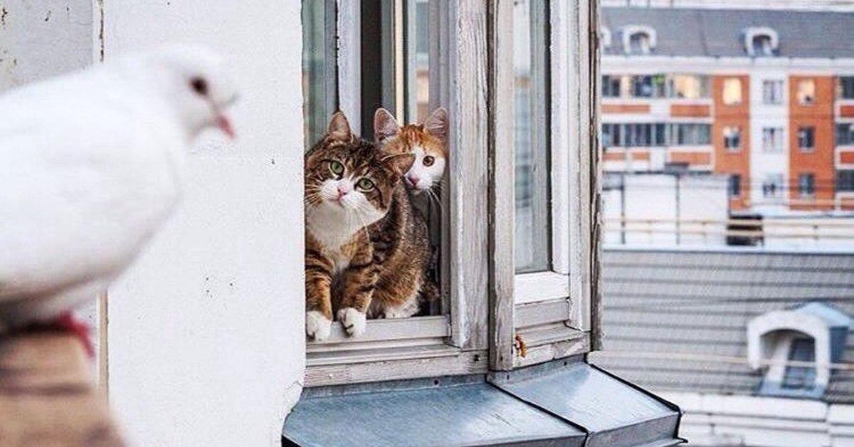 Больше, чем просто фото: два кота–психолога отговаривают гол.