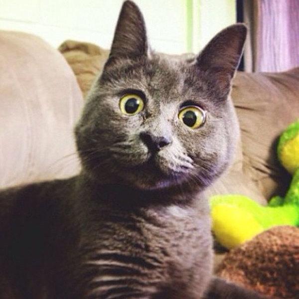 """Результат пошуку зображень за запитом """"фото удивленный кот"""""""