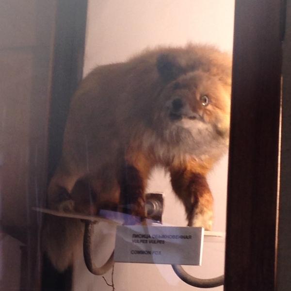 В догонку к постам об упоротых чучелах.(Музей Арктики и Антарктики, Питер 2015 год). Музей, Чучело, Упоротость