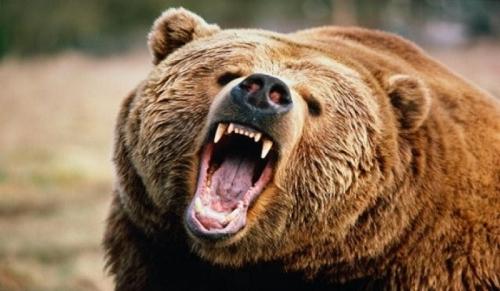 Атака медведя! медведь, текст, Кодирование, новости, не мое