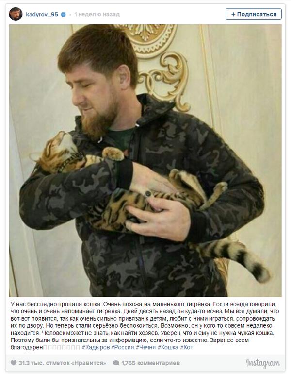 Ведущий HBO призвал зрителей поскорее найти кошку Рамзана Кадырова. Кот, Рамзан Кадыров, Длиннопост