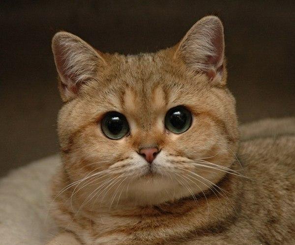 А ты че смотришь коты