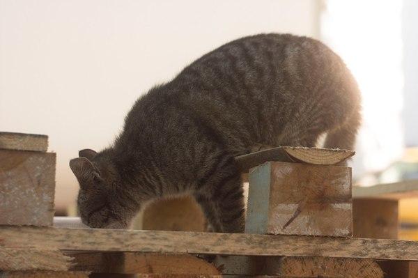 Кошка ищет дом.. кошка ищет дом, Москва, помощь животным, длиннопост, КОТ