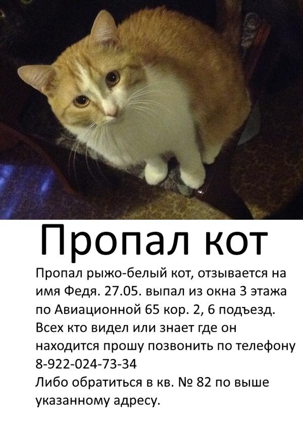 Екатеринбург, нужна ваша помощь! Потерялся кот, Сила пикабу, Напомощь, Умаляю, Длиннопост, Помощь, Кот