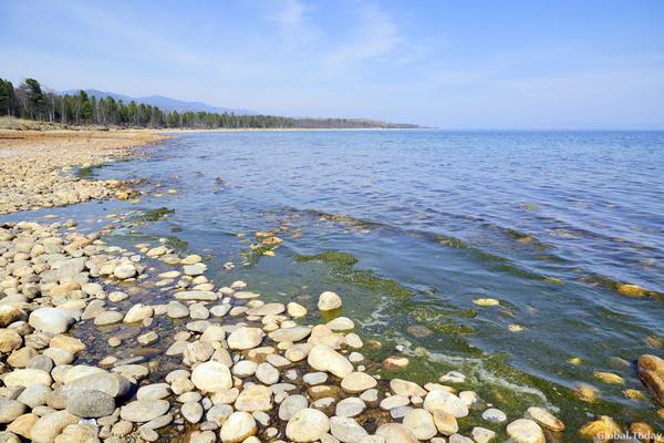 Умирающий Байкал: спирогира и смертельно опасные цианобактерии Байкал, Байкальск, Спирогира, Цианобактерии, Длиннопост