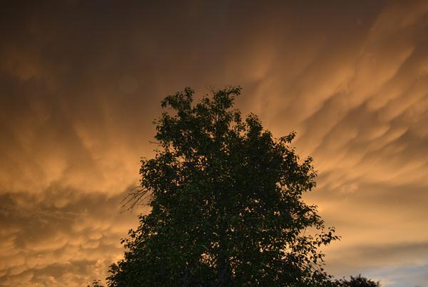 Закат на фоне груши Закат, Дерево, Природа