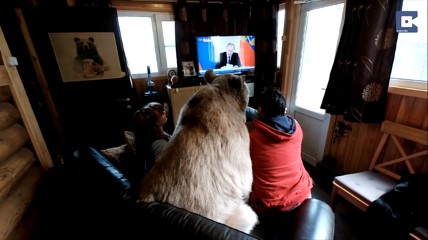 Российская семья приютила и вырастила домашнего медведя медведь, россия