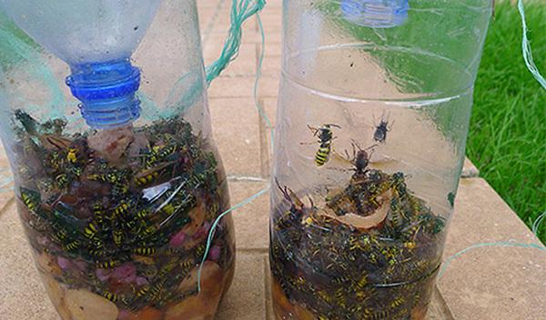 Как сделать эффективные ловушки для любых насекомых Лайфхак, Насекомые, Ловушки