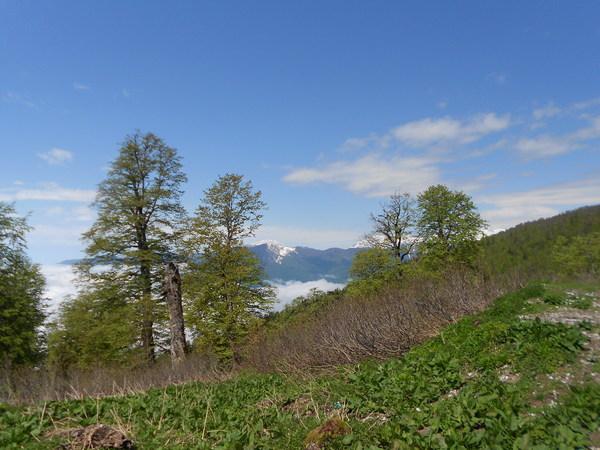 Кавказ Горы, Кавказские горы, Длиннопост