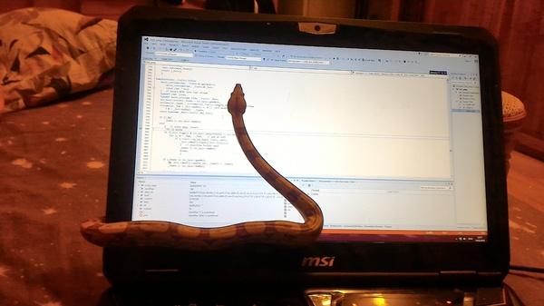 Уважаемая комиссия, я не успела написать диплом по причине АААА ЗМЕЯ АААААА Змея, Диплом, Прокрастинация, C++