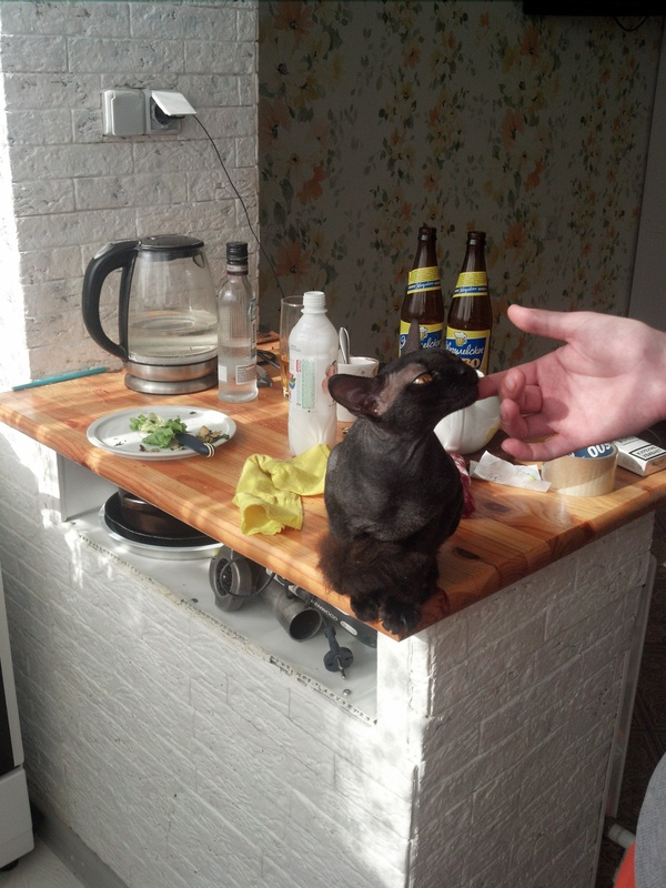 Валенок Кот, Валенки, Метисы, Длиннопост