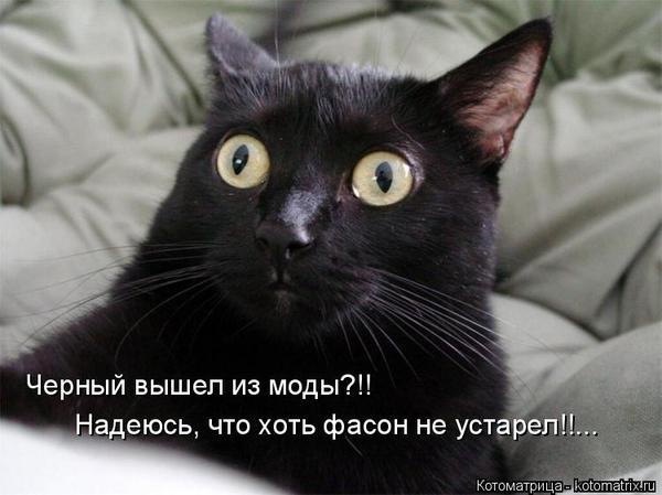Dream of a black cat scratching me