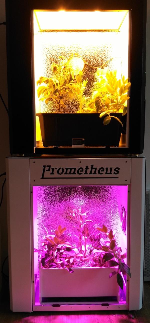 Дневник растениевода. MicroGrow, Growbox, Гроубокс, ДНаТ vs LED, Растениеводство, Длиннопост