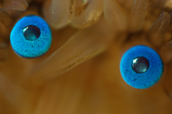 Эволюция глаза Познавательно, Глаза, Эволюция, The National Geographic, Длиннопост