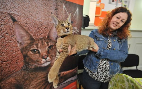 Самый дорогой котенок в россии