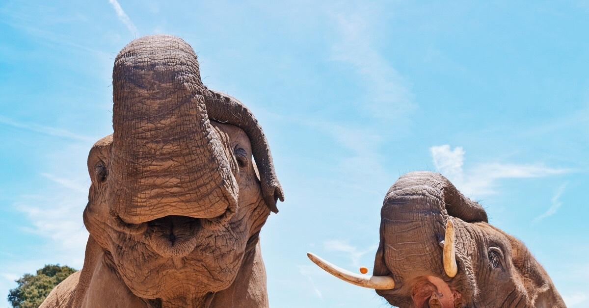 Приколы картинки слоны