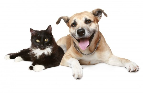 does pet insurance cover spaying