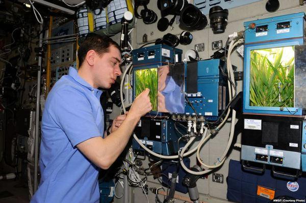 Космическое растениеводство. Растениеводство в космосе, Космический гроубокс, МКС, Оранжерея ЛАДА, Длиннопост