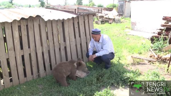 Семья из Восточного Казахстана приютила медвежонка Медведь, Казахстан, Длиннопост