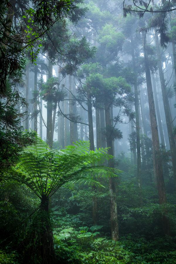 В таинственном лесу