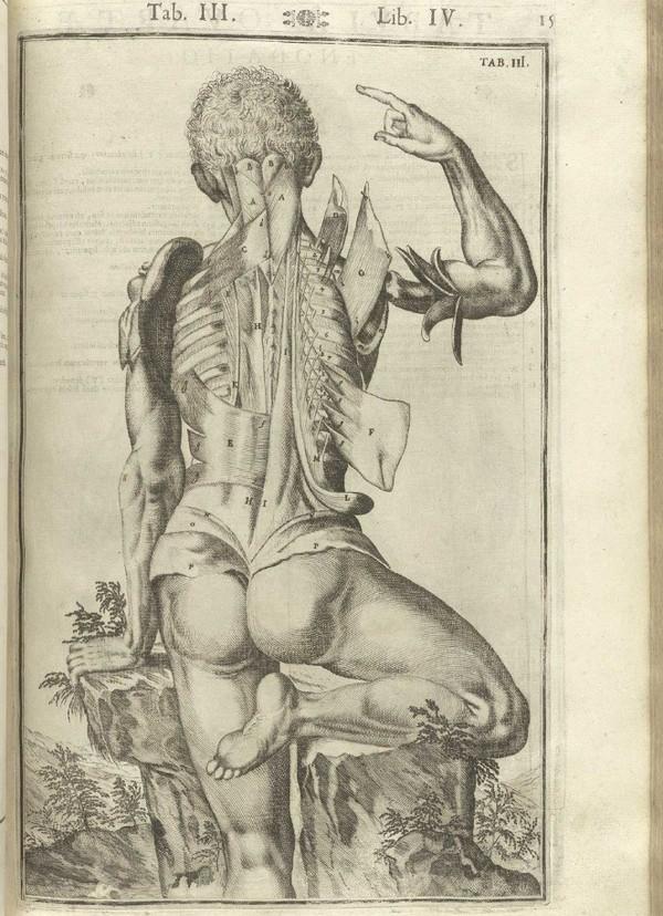 Что нужно знать о коже человека Кожа, Человек, Анатомия, Медицина, Просвещение, Интересное, Длиннопост
