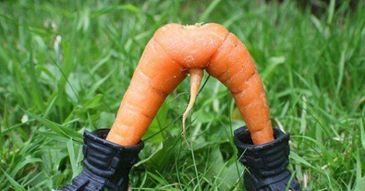 Морковка прикольная картинка, рисунки