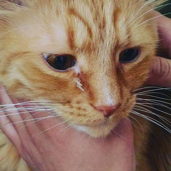 Котики подрались Кот, Драка, Когти, Моё, Фото, Рыжийкот