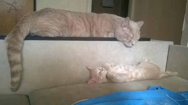Пропал котенок, Волгоград! Помощь, Волгоград, Потеряшка, Кот